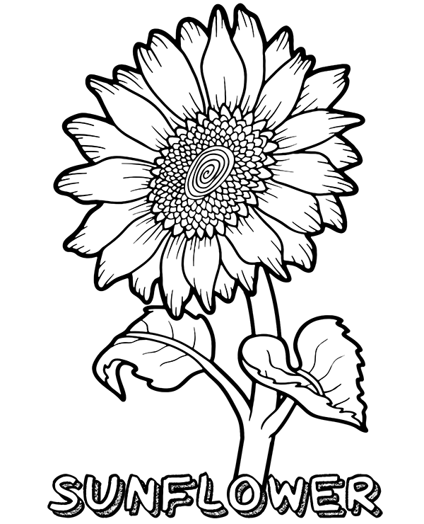 Sunflower Coloring Pages Pictures - Whitesbelfast