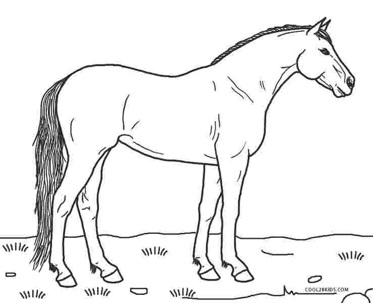 Horses Coloring Pages Picture - Whitesbelfast.com