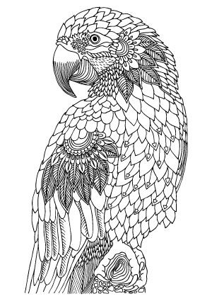 Adult Animal Coloring Pages Ideas Whitesbelfast Com