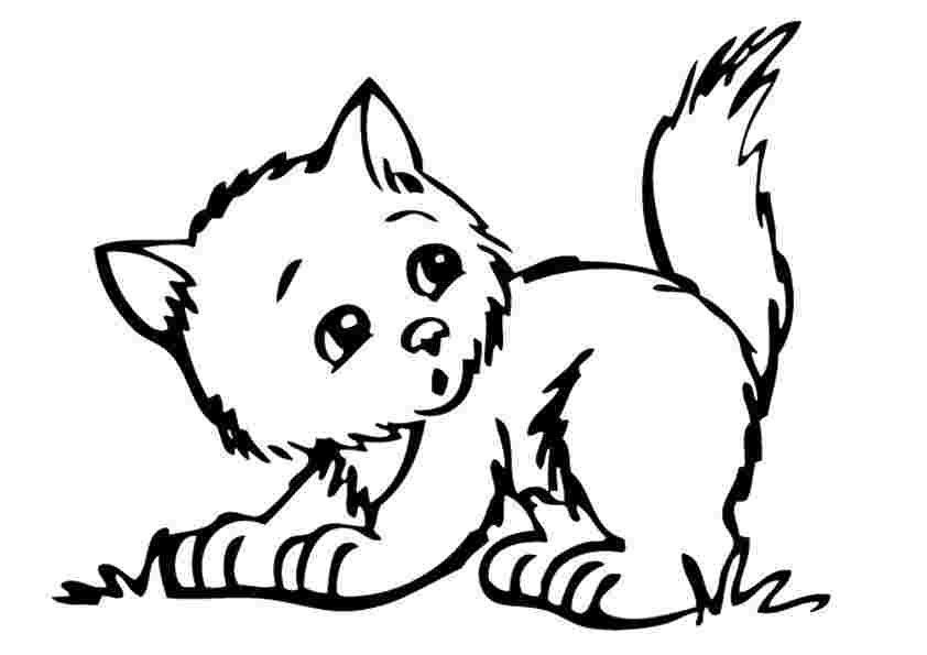 Kitten Coloring Pages Picture Whitesbelfast