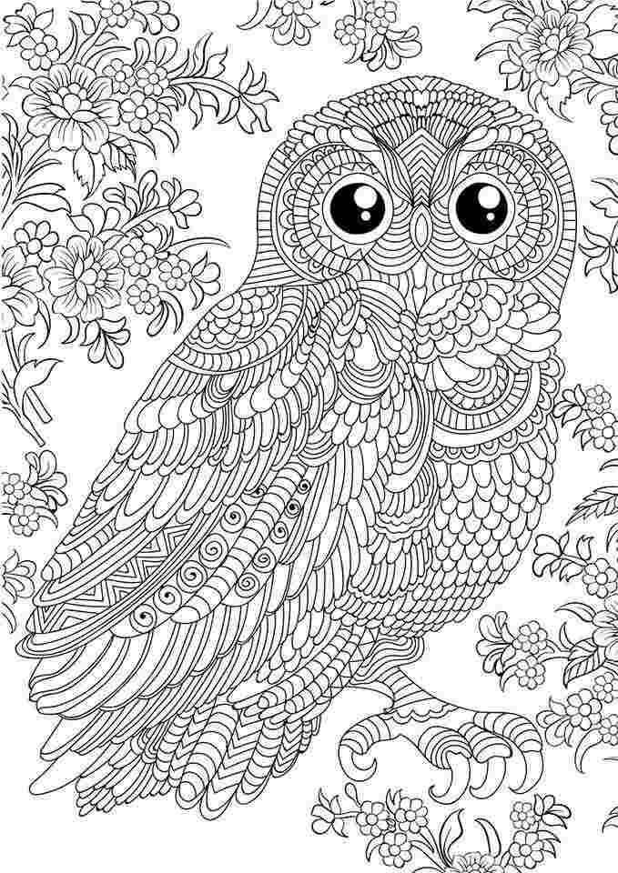- Owl Coloring Pages For Adults Picture - Whitesbelfast