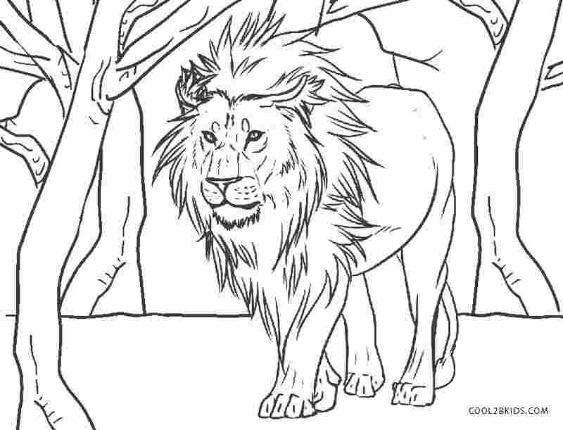 - Lion Coloring Pages Pictures - Whitesbelfast