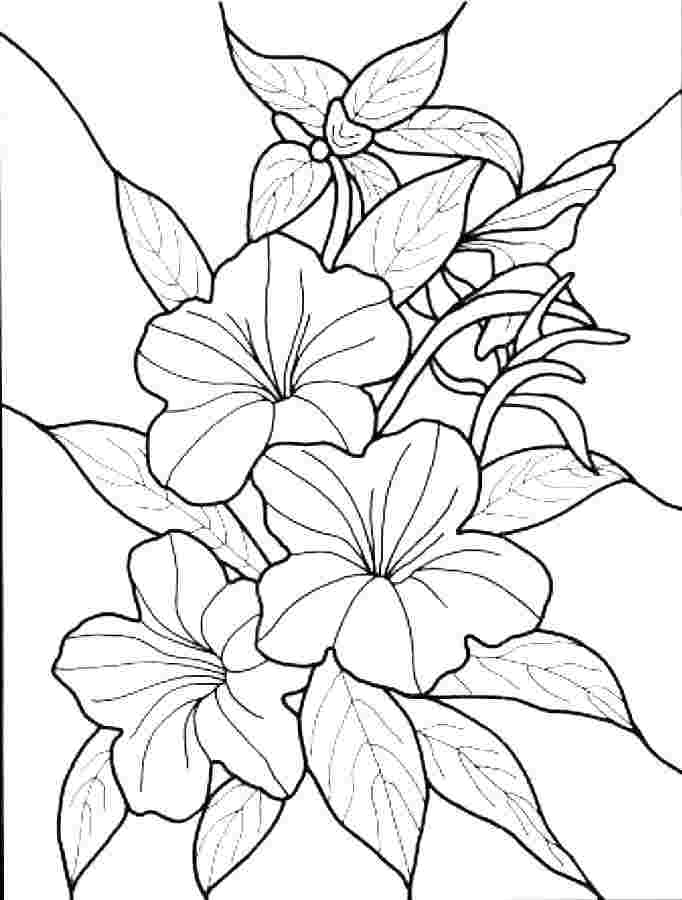 Spring Flower Coloring Pages Ideas Whitesbelfast
