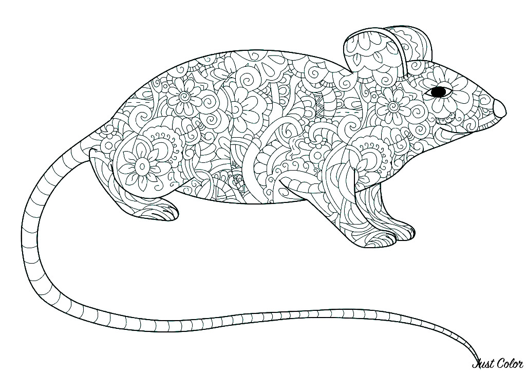 Baby Lion King Coloring Pages - Drawing Of A Baby Lion Clipart ... | 724x1024