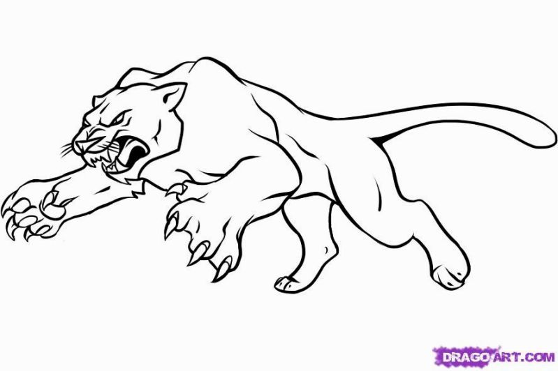 Panther Coloring Pages Pictures Whitesbelfast