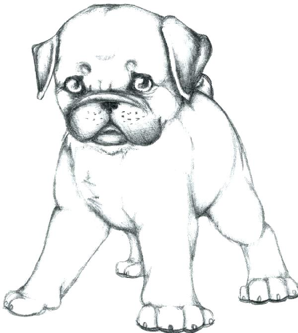 Pug Coloring Pages Printable Picture Gallery Whitesbelfast Com