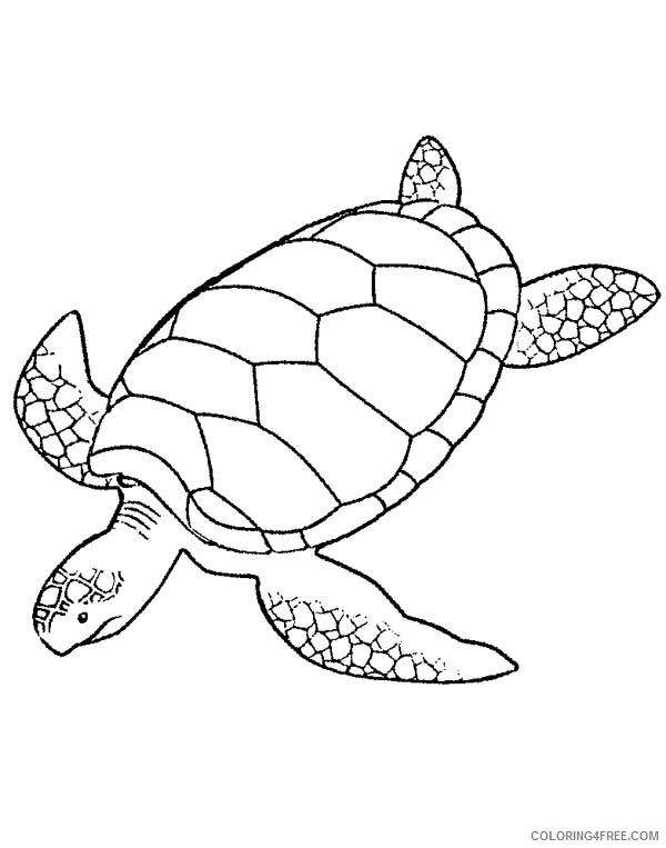 Sea Turtle Coloring Pages Pictures - Whitesbelfast.com