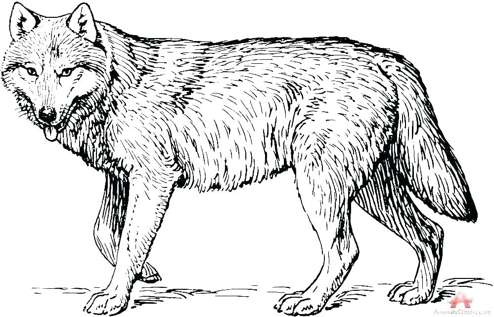 - Wolf Coloring Pages Picture - Whitesbelfast